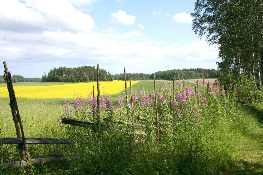 Maatilapuoti maalaismaisemassa